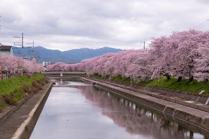京都・久世郡久御山町・東一口地区20170412-1