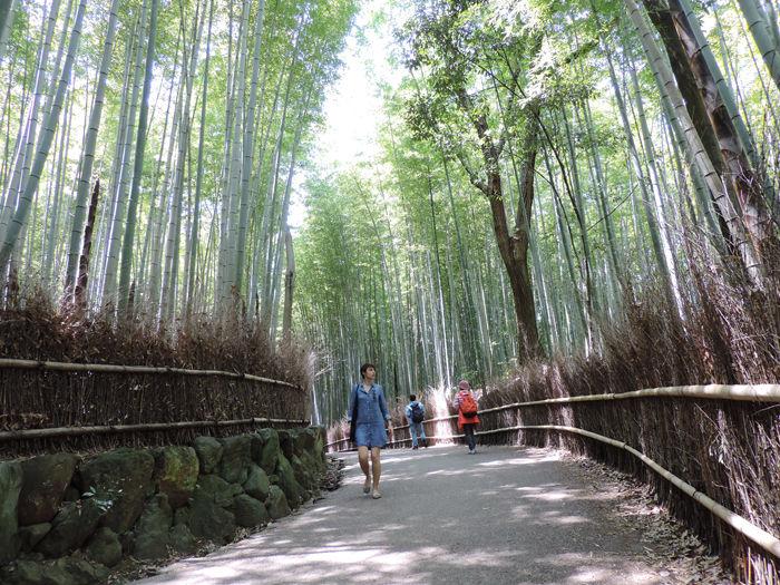京都嵐山竹林の道6