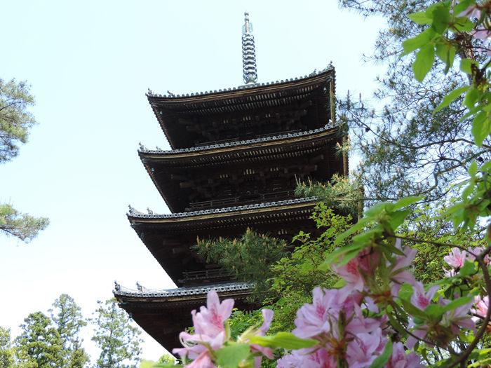 京都世界遺産総本山仁和寺7