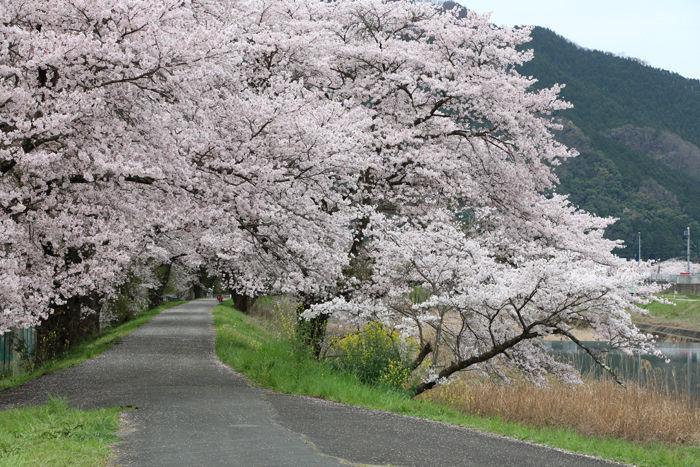 兵庫・朝来市・和田山町枚田岡地区20160406-3