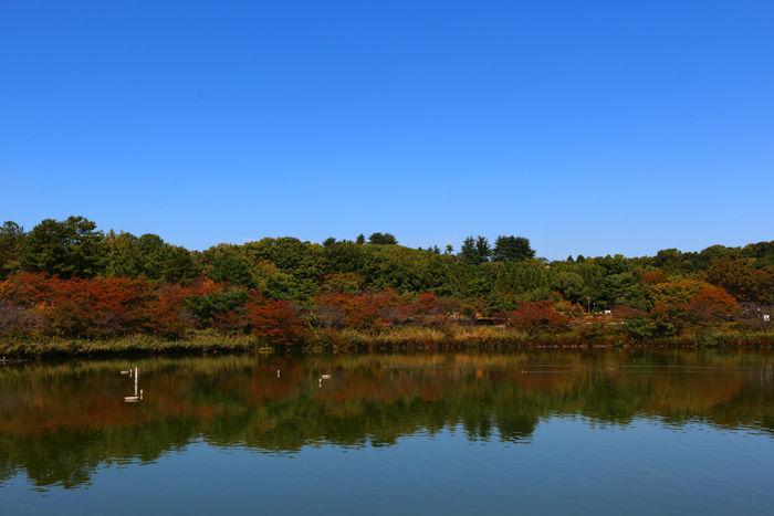 大阪・鶴見区・花博記念公園鶴見緑地20141024-2