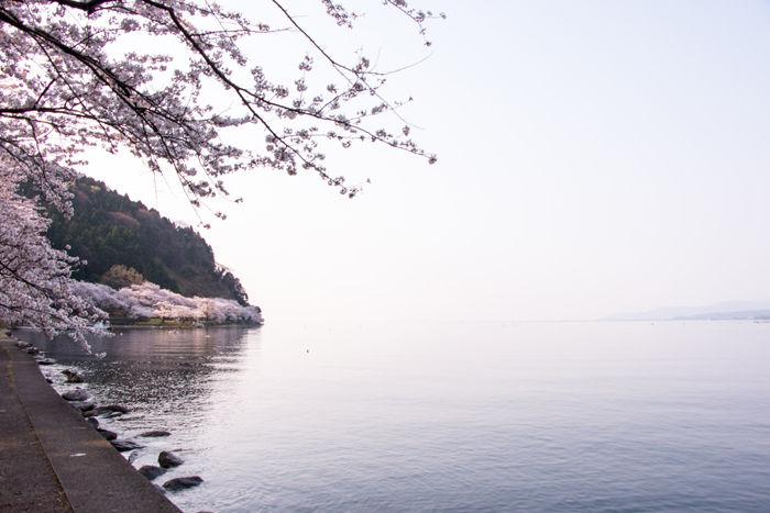 滋賀・高島市・海津大崎20170414-2