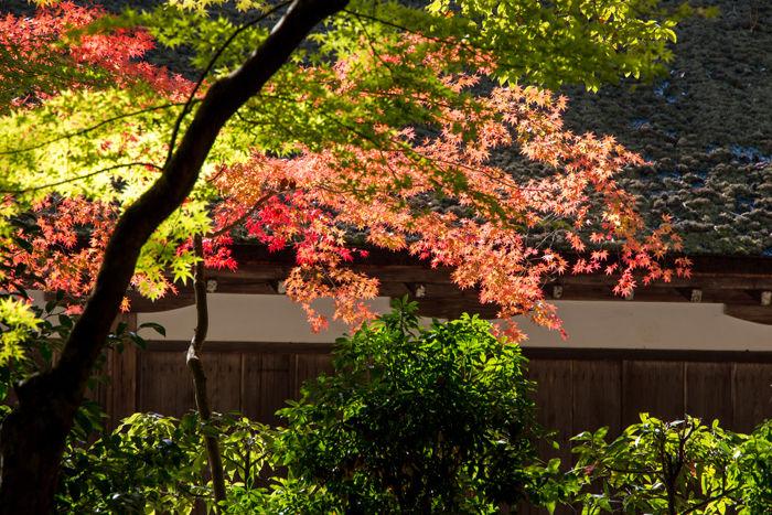 京都・北区・賀茂別雷神社(上賀茂神社)20161113-5