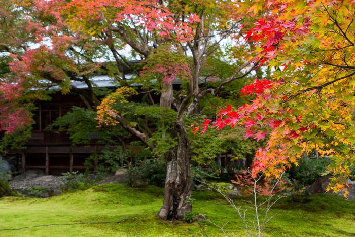 京都・右京区・宝厳院20161117-8