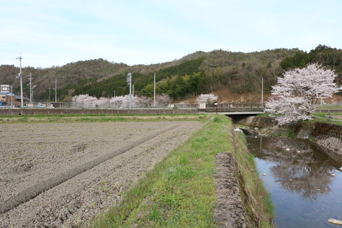 京都・南丹市・南八田橋20160406-3