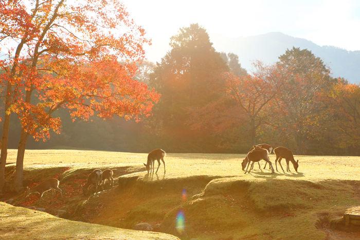 奈良・奈良市・奈良公園20141104-9