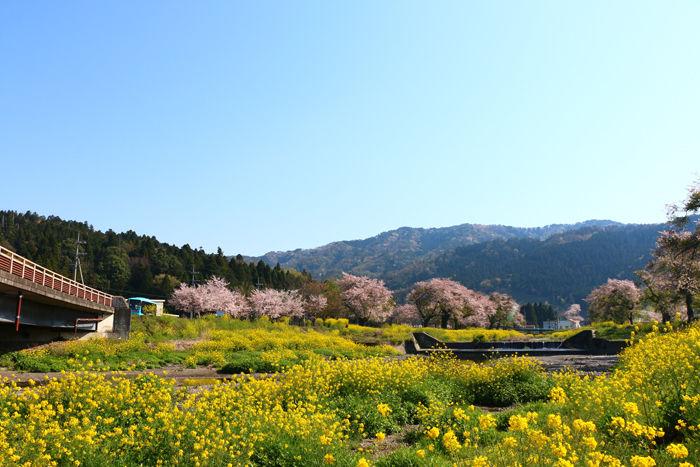 滋賀・長浜市・黒田大橋20160412-7