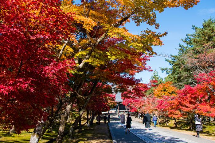 京都・右京区・仁和寺20161116-1