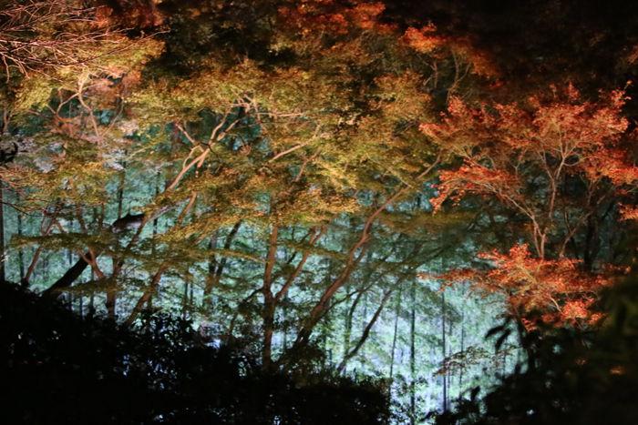 京都・東山区・天台宗青蓮院門跡20131123-3