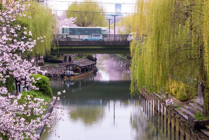 京都・伏見区・宇治川派流20170408-7