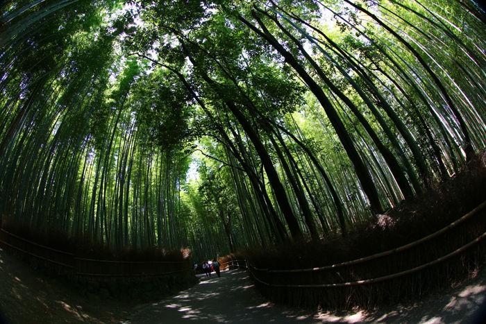 京都・右京区・【魚眼風景】嵐山竹林の道20150527-6