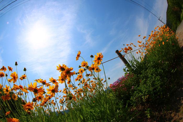 京都・右京区・【魚眼風景】広沢池界隈20150527-5