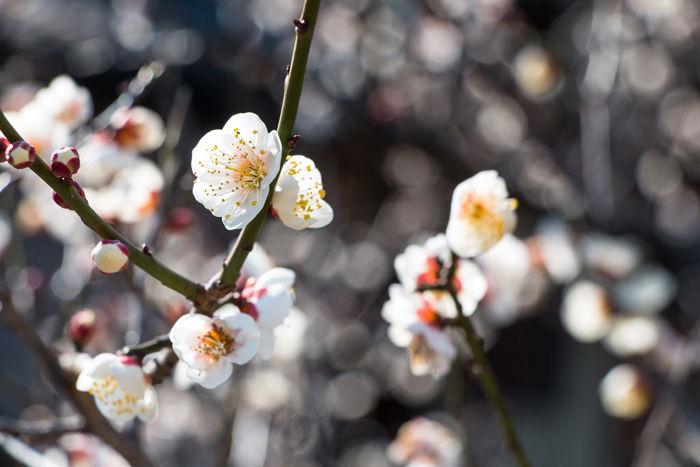 京都・東山区・祇園白川20170216-3