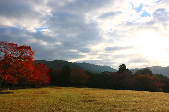 奈良・奈良市・奈良公園20141104-10