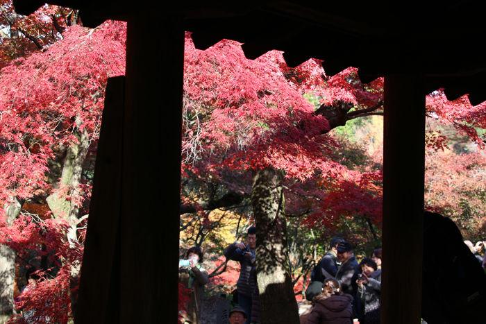 京都・東山区・臨済宗大本山東福寺20131121-1-10