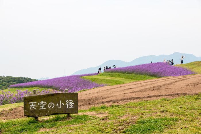 兵庫・淡路市・あわじ花さじき20170624-1