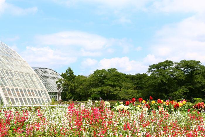 京都・左京区・京都府立植物園20160729-1