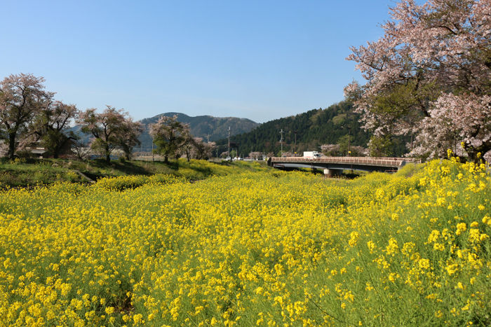 滋賀・長浜市・黒田大橋20160412-6