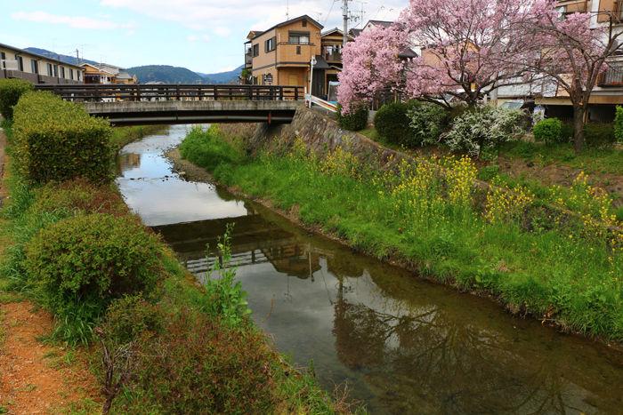 京都・右京区・坂本橋20160402-4