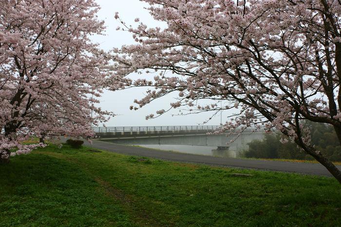 京都・福知山市・新音無瀬橋20160406-5