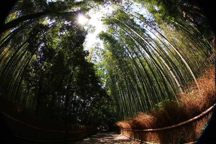 京都・右京区・【魚眼風景】嵐山竹林の道20150527-1