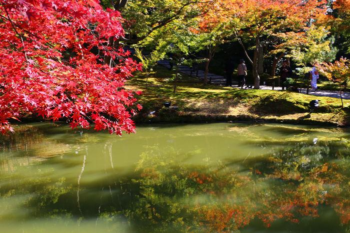 京都・東山区・高台寺20151116-4