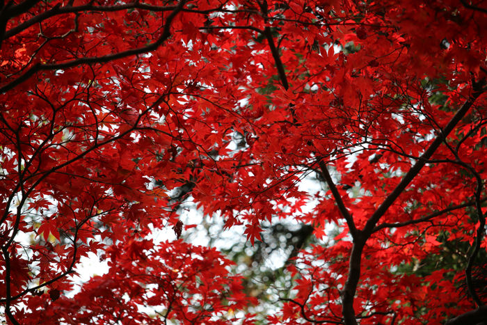 大阪・箕面市・箕面の滝20131120-2-11