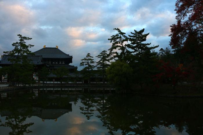 奈良・奈良市・奈良公園20141104-2