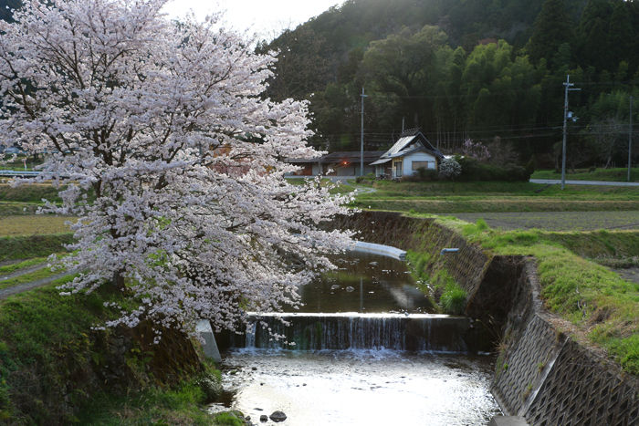 京都・南丹市・南八田橋20160406-1