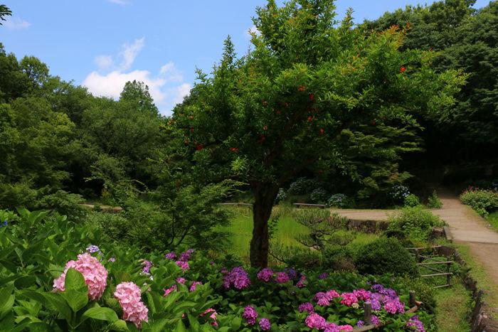 大阪・枚方市・山田池公園20150621-3
