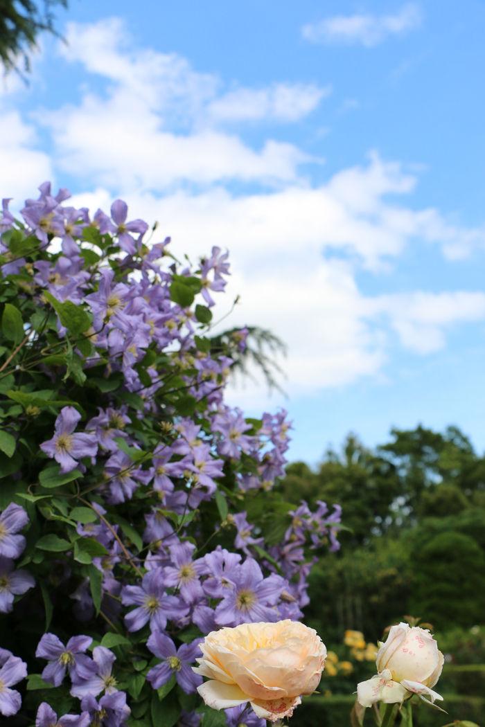 京都・左京区・京都府立植物園20160601-5