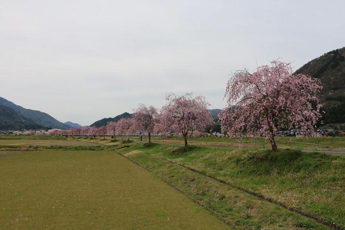 兵庫・朝来市・和田山町枚田地区20160406-1