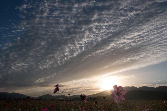 奈良・橿原市・藤原宮跡(朝景)20161010-9