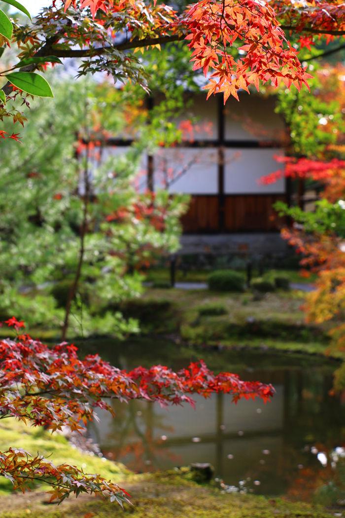 京都・北区・等持院20151121-7