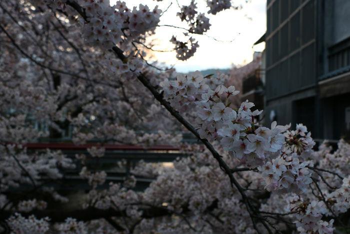京都・東山区・三吉町地区20160402-2