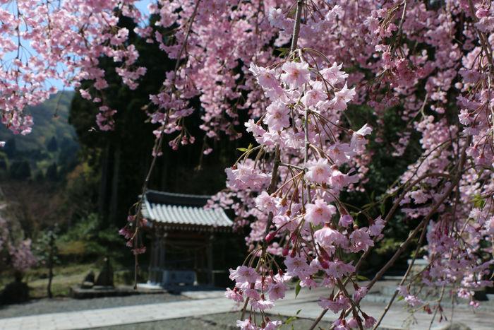 滋賀・長浜市・矢合神社20160412-4