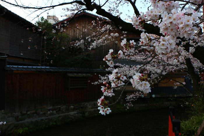 京都・東山区・祇園白川20150331-5