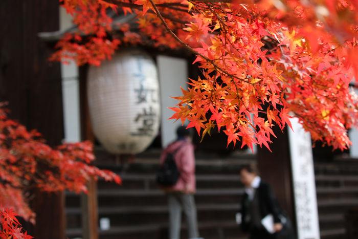 京都・左京区・真正極楽寺【真如堂】20131121-1-4