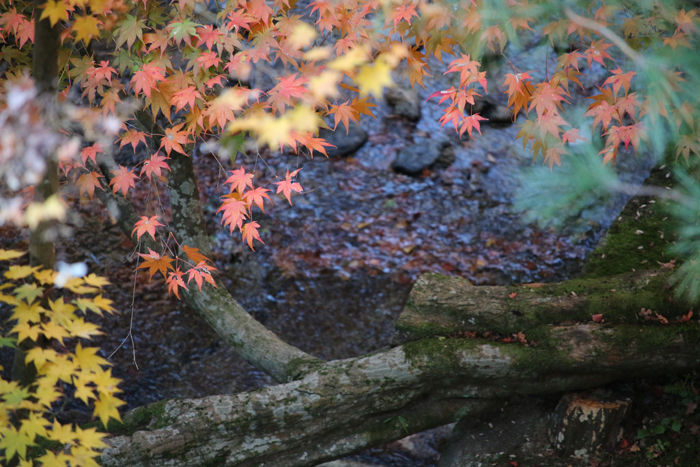 京都・東山区・臨済宗大本山東福寺20131121-2-6