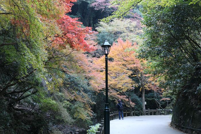 大阪・箕面市・箕面の滝20131120-1-8