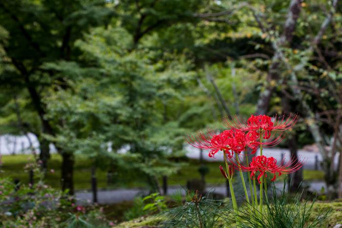 京都・左京区・南禅寺20160925-3