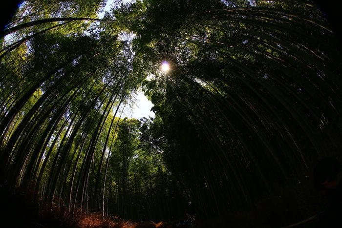 京都・右京区・【魚眼風景】嵐山竹林の道20150527-2