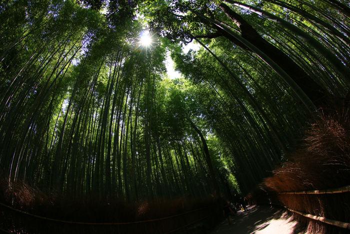 京都・右京区・【魚眼風景】嵐山竹林の道20150527-7