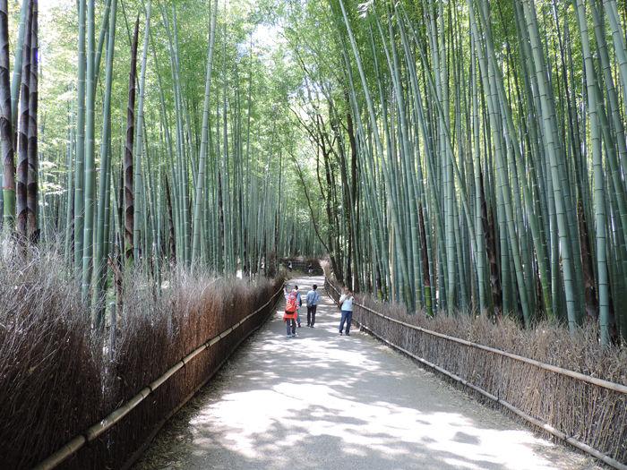 京都嵐山竹林の道5