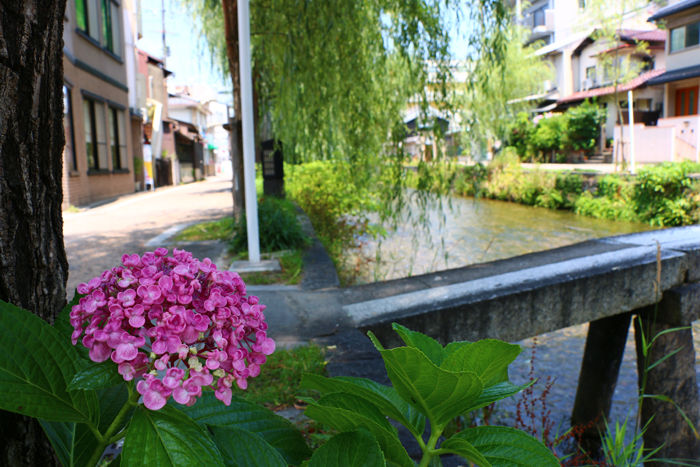 京都・東山区・石橋町地区20150624-1