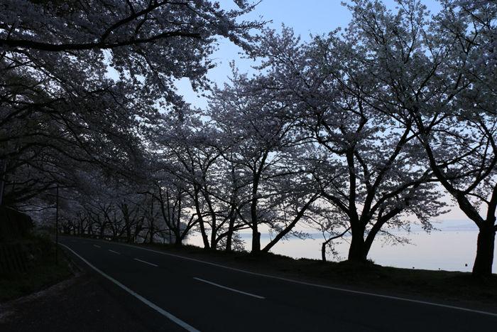 滋賀・高島市・海津大崎20160412-3