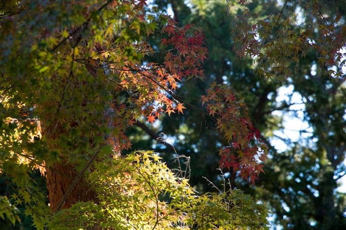 京都・左京区・南禅寺20161102-1