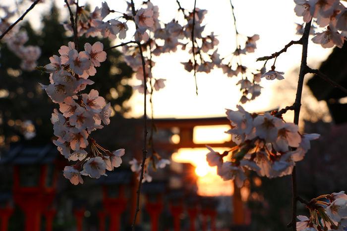 京都・北区・平野神社20160330-3