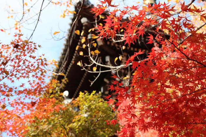 京都・左京区・真正極楽寺【真如堂】20131121-1-8