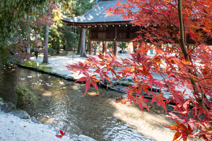 京都・北区・賀茂別雷神社(上賀茂神社)20161113-6